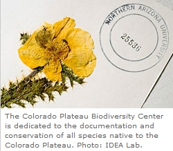 IDEA Lab Colorado Plateau Biodiversity Center photo of flower